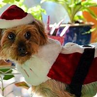 Adopt A Pet :: Martina - Pueblo, CO