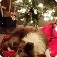 Adopt A Pet :: Millie - Pueblo West, CO