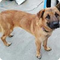 Adopt A Pet :: Rebel - Costa Mesa, CA