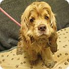 Adopt A Pet :: *GRIFFIN