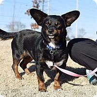 Adopt A Pet :: Libby - Marietta, GA