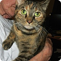 Adopt A Pet :: Katrina~ Endless Love & Laughs - Cleveland Heights, OH