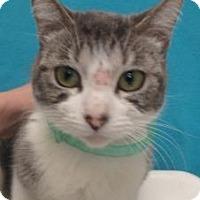 Adopt A Pet :: Sammie #155625 - Apple Valley, CA