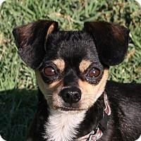 Adopt A Pet :: Fieval - Edmonton, AB