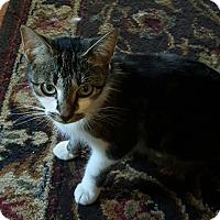 Adopt A Pet :: Serena - Dewitt, MI