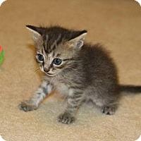 Adopt A Pet :: Alfie - Wilmore, KY