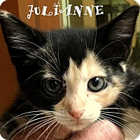 Calico Kitten for adoption in Mooresville, North Carolina - JULIANNE