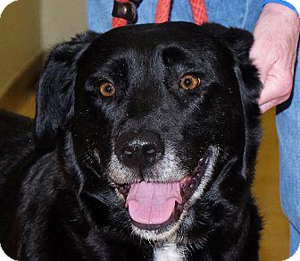 Labrador Retriever Mix Dog for adoption in Spokane, Washington - Mima