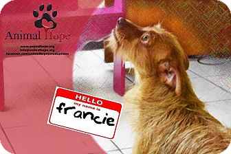 Terrier (Unknown Type, Small) Dog for adoption in Fort Worth, Texas - Francie