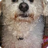Adopt A Pet :: Luna - Loxahatchee, FL