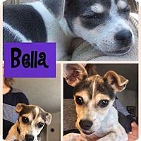 Adopt A Pet :: Bella - Albuquerque, NM