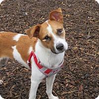 Adopt A Pet :: Puff - Princeton, MN