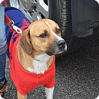 Adopt A Pet :: Maddox - Shinnston, WV