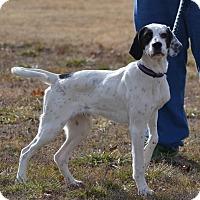 Adopt A Pet :: Gomer - Lebanon, MO