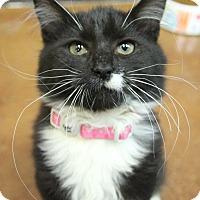 Adopt A Pet :: Isabell - Benbrook, TX