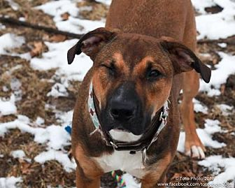 Shepherd (Unknown Type) Mix Dog for adoption in DeSoto, Iowa - Cubby