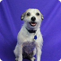 Adopt A Pet :: MARY - Westminster, CO