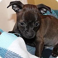 Adopt A Pet :: Cash - La Habra Heights, CA