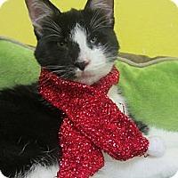 Adopt A Pet :: Orville - Mobile, AL