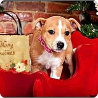 Adopt A Pet :: Twix - Owensboro, KY