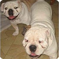 Adopt A Pet :: Knuckles - San Diego, CA