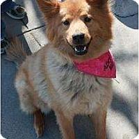 Adopt A Pet :: Jubilee - Arlington, TX