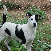 Adopt A Pet :: Buster - Portland, ME