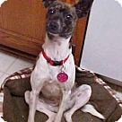 Adopt A Pet :: Bridget - 9 lbs