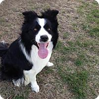 Adopt A Pet :: Max - Bellevue, NE