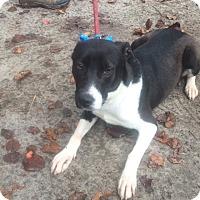 Adopt A Pet :: Misa - Daleville, AL