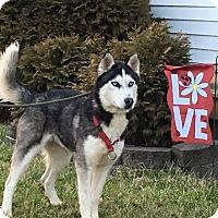 Adopt A Pet :: Lobo - Zanesville, OH