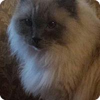 Adopt A Pet :: Newport - purebred - Ennis, TX