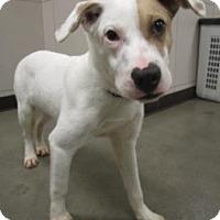 Adopt A Pet :: Jack - Union Grove, WI