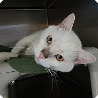 Adopt A Pet :: Kazoo - Elyria, OH