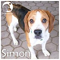 Adopt A Pet :: Simon - Chicago, IL