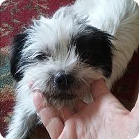 Adopt A Pet :: Squirt - Ocean Ridge, FL
