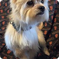 Adopt A Pet :: Beeper - Modesto, CA