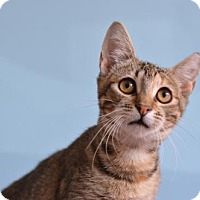 Adopt A Pet :: Darla 161368 - Atlanta, GA
