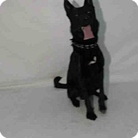 Adopt A Pet :: A361770 - Orlando, FL