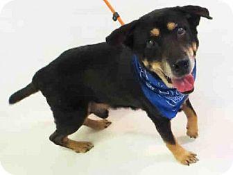German Shepherd Dog Mix Dog for adoption in Sanford, Florida - HORRACE