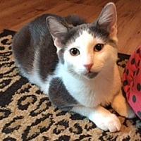 Adopt A Pet :: Lily - Courtesy Listing - McKinney, TX