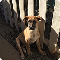 Adopt A Pet :: Paulina - BONITA, CA