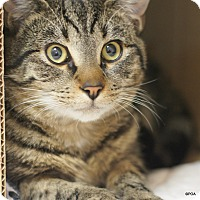 Adopt A Pet :: Benji - East Hartford, CT