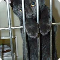 Adopt A Pet :: 47332 Charcoal - Zanesville, OH