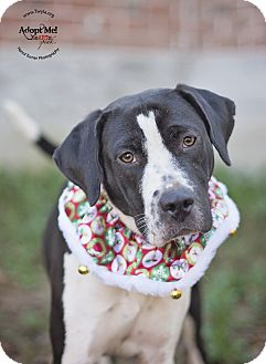 Hound (Unknown Type)/German Shorthaired Pointer Mix Dog for adoption in Kingwood, Texas - Cookie