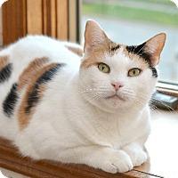 Adopt A Pet :: Primrose - Wauconda, IL