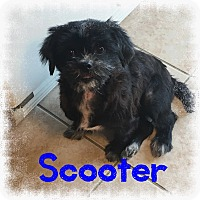 Adopt A Pet :: Scooter - Fort Wayne, IN