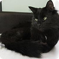 Adopt A Pet :: Elijah - Chicago, IL