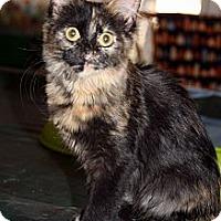 Adopt A Pet :: Friday - Arlington, VA