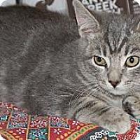 Adopt A Pet :: Comet - Barnegat, NJ